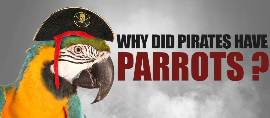 Why did pirates have parrots ?